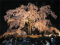 Sakura Hi-Tech.