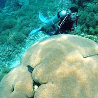 Морские заповедники и дайвинг-курорты Малайзии