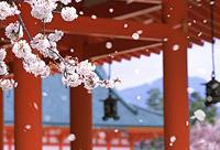 Япония. Праздник ханами