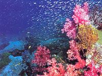 Коралловые рифы андаманского моря
