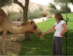 парк Пустынное ранчо