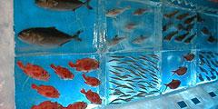 Ледяной аквариум в Японии