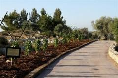 Центра по выращиванию священных деревьев