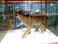 зоологический музей в Шри Ланке